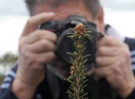 Affiche du film Paroles de plantes au cinéma Paradiso de St MArtin en Haut